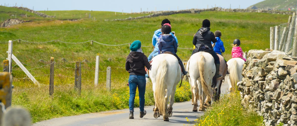 Horses on a bridleway